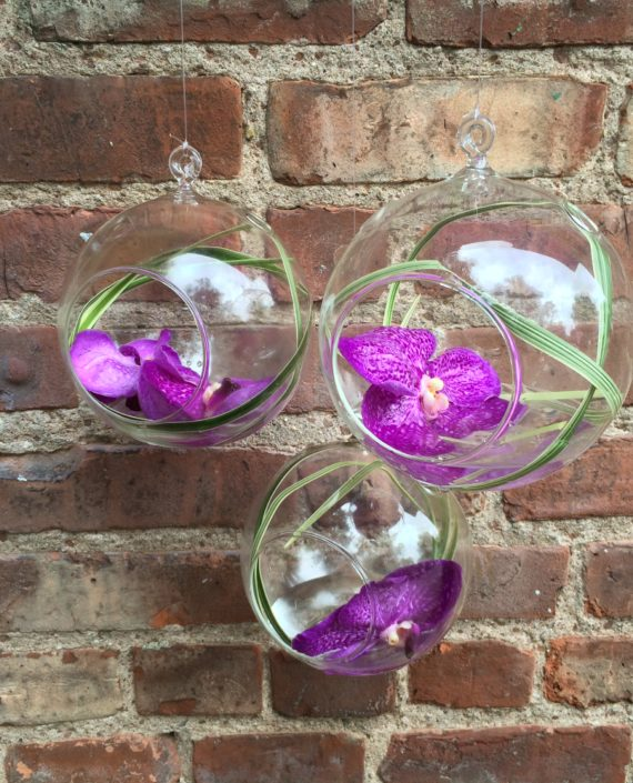 Orchid Orbs
